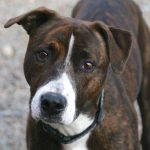 Adoptable: Apollo is looking for a kind care giver