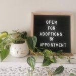 UPDATE regarding adoptions at Bide Awhile