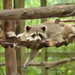 Shubenacadie Wildlife Park, Camping Season Opening in June With Safety Measures In Place