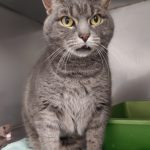 NS SPCA: Darling Precious is only 6 years old and needs a forever home