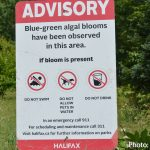Risk advisory extended to Lake Banook due to possible blue-green algae bloom; Birch Cove Beach closed to swimming