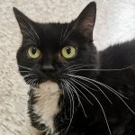 Bide Awhile: Little miss Nicole is still waiting for her forever home