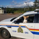 Chéticamp RCMP was called to the scene of a Corgi who was left inside a car on a hot day