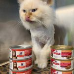 NS SPCA: Stu has noticed that we are running very low on wet food!