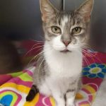 NS SPCA : Kira is available for adoption from the Dartmouth SPCA