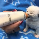 NS SPCA: BOTTLE BABY KITTEN FOSTERS NEEDED