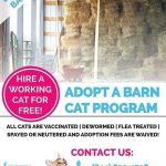 Are you or someone you know looking for a barn cat?