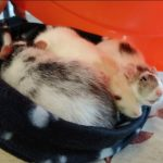 NS SPCA Weekly Highlight – 3 ratty girls