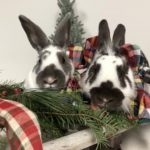 NS SPCA Weekly Highlight – Forrest and Cove
