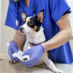 The SPCA Veterinary Hospital is accepting new patients at their brand new state-of-the-art animal hospital