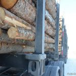 Forest Sector Safety Measures Fund Opens