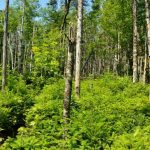 Draft Forest Management Guide Open for Public Consultation