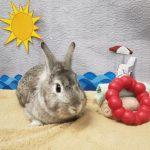 NS SPCA: Weekly Highlight – David Hasselhop