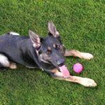 NS SPCA: The Bodj von Grundfeld® Scholarship