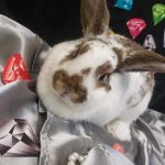 NS SPCA: Available for Adoption