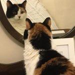 NS SPCA Weekly Highlight – Sasha