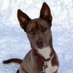 NS SPCA: Weekly Highlight – Letty