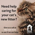 Have you heard about Bide Awhile's mother/kitten program?