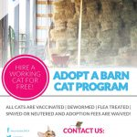 Are you or someone you know looking for a working cat?