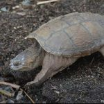 World Turtle Day History