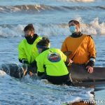 ABOUT THE MARINE ANIMAL RESPONSE SOCIETY, HOW TO CONTACT THEM AND HOW TO VOLUNTEER