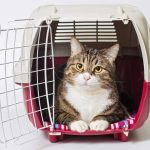 NS SPCA – Donations of Cat Carriers needed