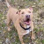 NS SPCA Adoptable Highlight – Felix