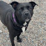 NS SPCA Adoptable Highlight – Keeta