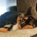 NS SPCA Adoptable Highlight – Ellie